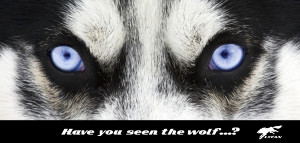 have u seen the wolf